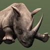 Cosas que quizás no sabías de los rinocerontes