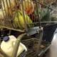 Materia Fecal encontrada en 72 por ciento de los carritos de supermercado