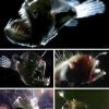 ¿Hasta qué profundidad pueden vivir los peces?