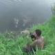 Fotógrafo imprudente, a punto de ser devorado por un cocodrilo