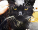 Gato sobrevive después de que su dueño intentara cocinarlo en un microondas