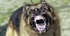 Rabinos condenan a muerte a un perro por tener el alma de un abogado maldito