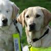 Perro guía perdió la visión y le asignaron un perro guía