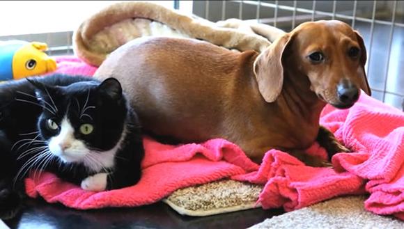 La increíble historia de un perro que cuida de un gato parapléjico arrasa en la red