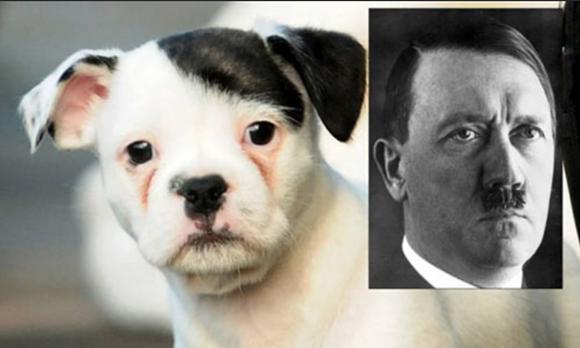 Encuentran un perro que se parece a Hitler